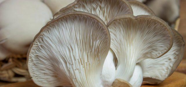 Hlíva ústřičná: Chutná houba, která vám vrátí zdraví